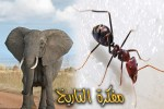 النملة والفيل